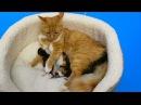 Cat baby Shower / Сколько котят родила КОШЕЧКА Мурка