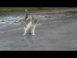 Don't stop kitty on ice