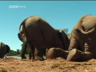 BBC - Wildlife Special Elephants Spy In The Herd DVB DivX6 MP3 - ArabHD.net