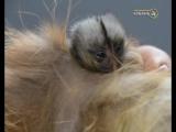 В зоопарке Натухаевской появились детеныши редкой породы обезьян
