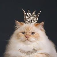 Карина Царёва