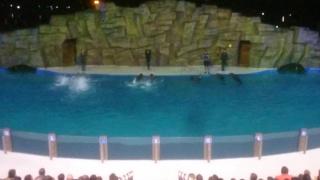 Batumi dolphin show