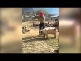 Karma Farmer Attempts To Kill His A Pig With An Axe But Almost Knocks Himself Out!