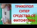 ТРИХОПОЛ - СУПЕР СРЕДСТВО ОТ ФИТОФТОРЫ И БОЛЕЗНЕЙ ТОМАТОВ