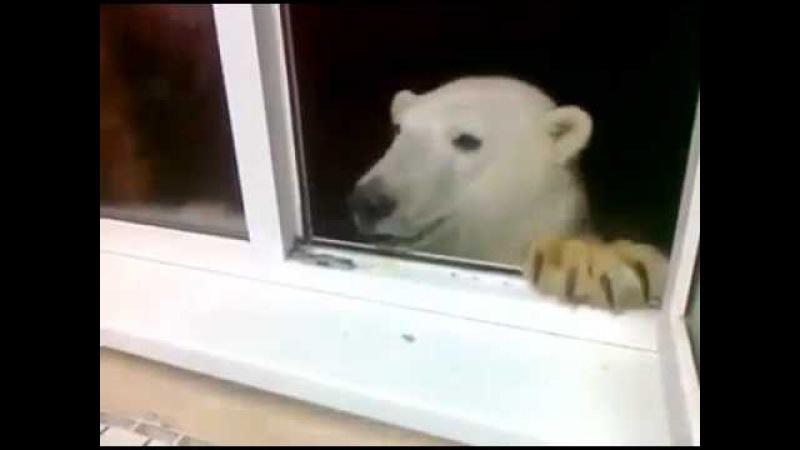 Медведь зашел по-соседски. Где-то в России.