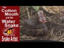 Snake Artist E02 The Cottonmouth and the Water Snake