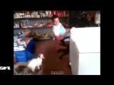 #50 Гифки со звуком  Прикольные видео подборки! vk.comgifswithsound