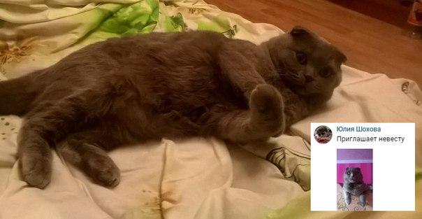 [id147416007|Cутенёрша] кривого кота, которая не в кусе про стандарты