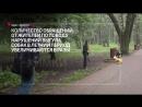 Можно ли выгуливать собаку в парке?