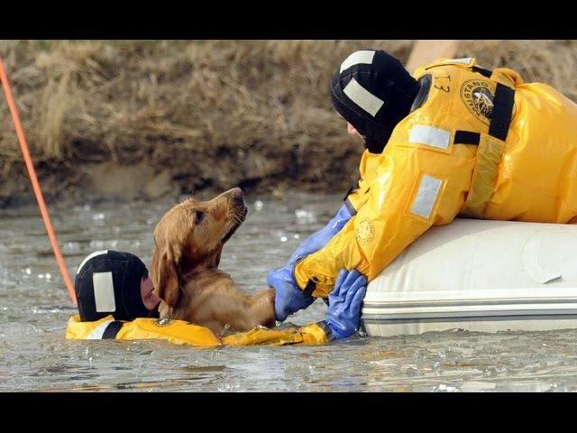 Эмоциональное видео о спасении собак в ЧС