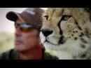 Удивительная дружба в мире природы (3 из 4, 2016)
