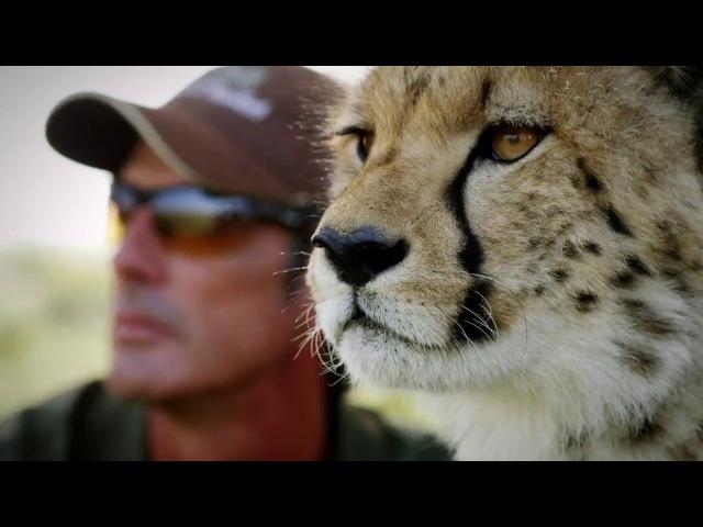 Удивительная дружба в мире природы 3 из 4 2016