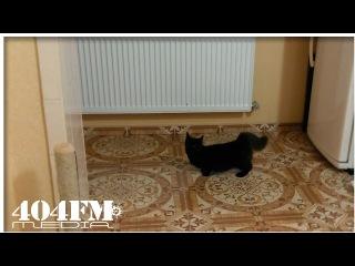 Black cat on a fast start firing rubber! Funny cat