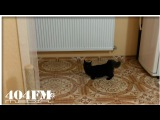 Black cat on a fast start firing rubber! Funny cat