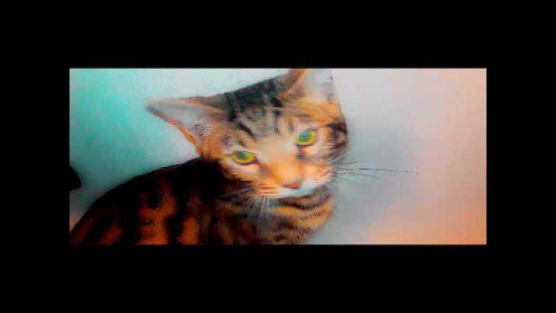 приключения кота мартина (черапаха)