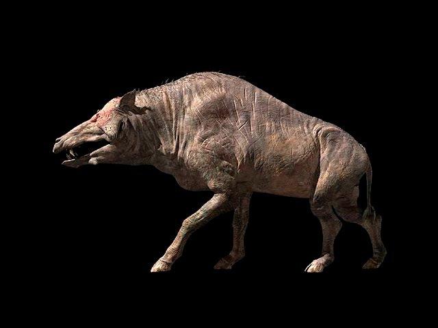 Доисторические Хищники: Адский Кабан. Энтелодонт \ National Geographic HD