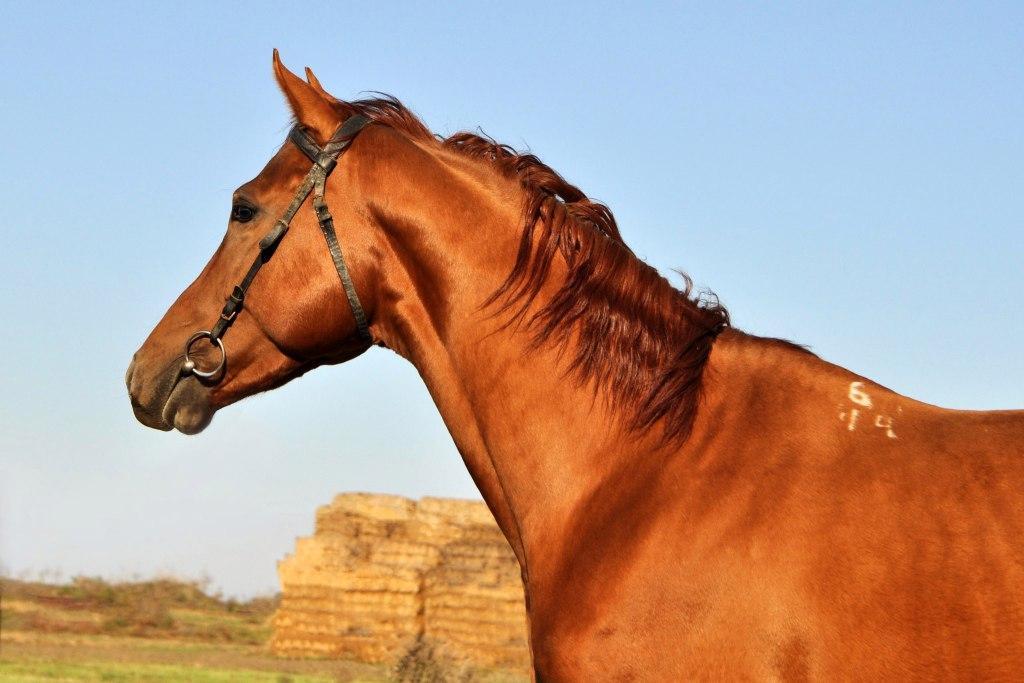 юловский конный завод фото это