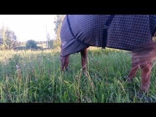 хомячим траву