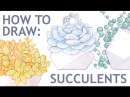 How to draw succulent Echeveria Lauii Watercolor timelapse Part 1