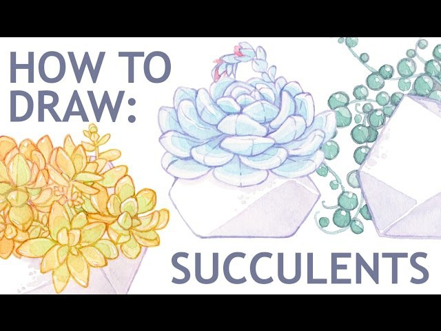 How to draw succulent Echeveria Lauii || Watercolor timelapse || Part 1