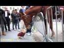 Смешное видео! Самые смешные лошади! Приколы про животных