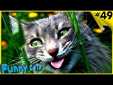 Приколы с котами ТОПОВАЯ подборка ФЕВРАЛЬ 2017