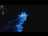 Биолюминесцентные водоросли