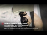 На Кубани такса стала мамой одноглазому котёнку Лунтику