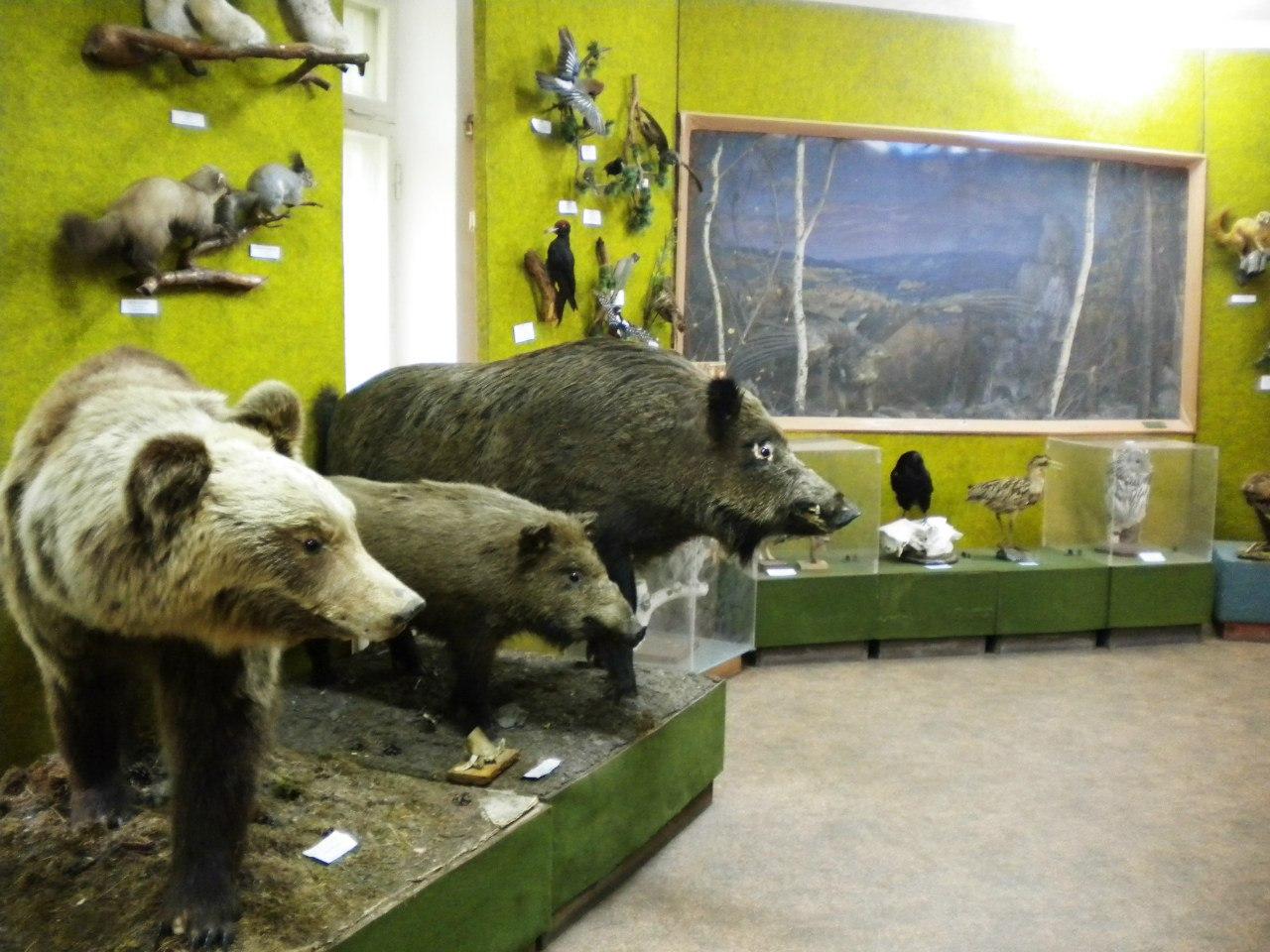 Медведи и кабаны (22.12.2016)