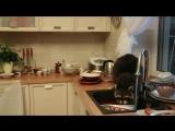 В Алматы енот забрался в чужой дом и помыл посуду