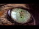 Smash Into Pieces Animal MUSIC VIDEO