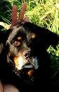 Помощь животным БУДЕННОВСК фото #10