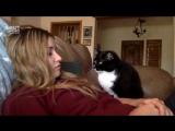 Кот просит его погладить