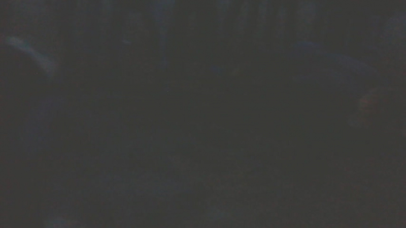 ОколоАвроры l1l( Сава и Лучик )