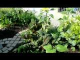2 Рон Финли Партизанское садоводство в Южном Централе