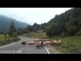 Нападение барашка на пастуха