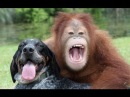 Обезьяна и собака Лучшие друзья: Песенка Человек собаке друг