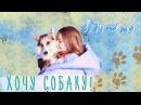 МОЯ КОРГИ ♡ Хочу собаку: мой опыт и советы, плюсы и минусы