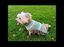How to Crochet a Poncho for a Dog