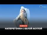 Наперегонки с белой акулой