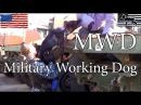 U.S. Military Working Dog Patrol Training Police K9 Training Dogs