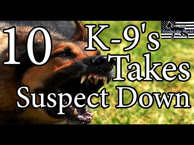 K-9's Takes Suspect Down 10
