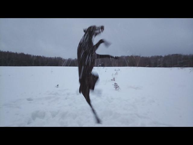 Битва со снежками Курцхаар Ричард (Рэй) Наши собаки