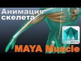 Уроки autodesk maya/Создание мускулатуры/Maya muscle/webinar/профессиональные Уроки Maya