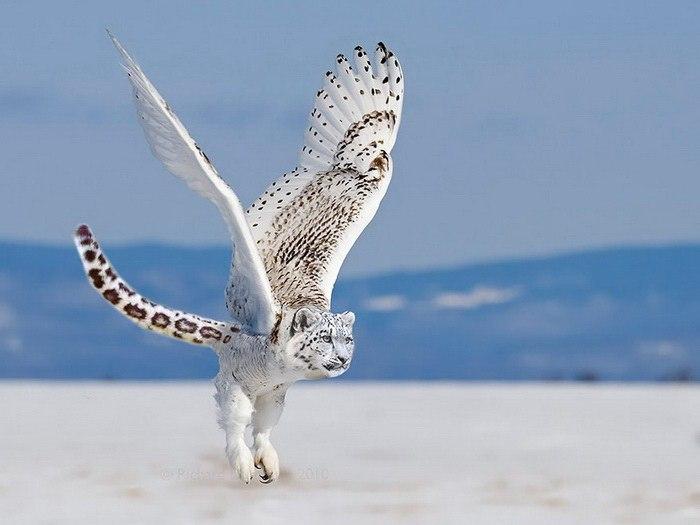 Невероятные животные-гибриды