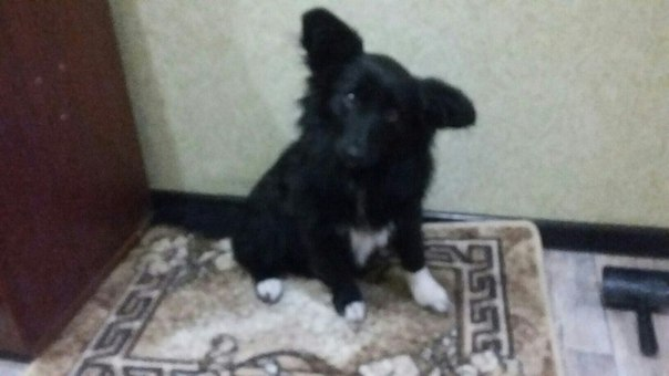 🆘ДРУЗЬЯ🆘  Самара.16 мая пропала маленькая собачка дворянской породы по