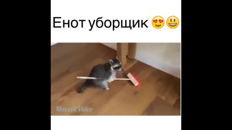Енот уборщик