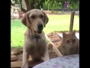 Кот попытался украсть у собаки