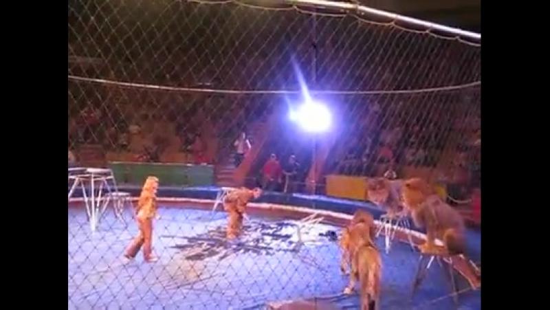 Panika v cirkusu ( - Sranda všeho druhu