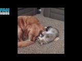 Приколы с котами смешные коты смешные кошки приколы коты приколы про кошек про к